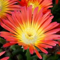 Wheels of Wonder® 'Fire Wonder' Ice Plant