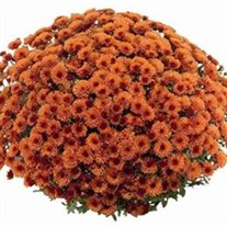 Orange Garden Mum  (Bronze)