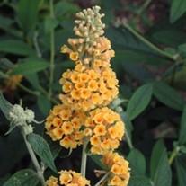 Online Garden Plants Center Perennials Amp Annuals